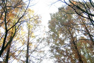 161129_autumn_trees.jpg
