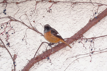 161227_bird.jpg