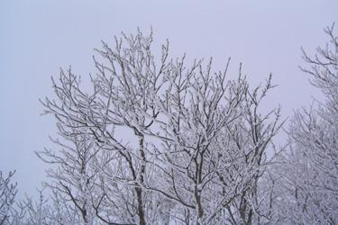 170108_snow_tree.jpg