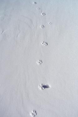 170113_foot_marks.jpg