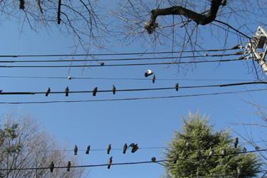 170115_birds.jpg