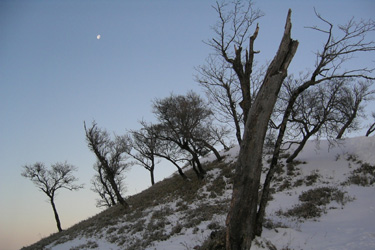 170204_tree_art.jpg