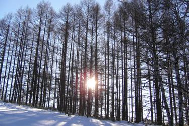 170205_morning_forest.jpg