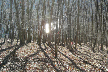 170214_winter_woods.jpg