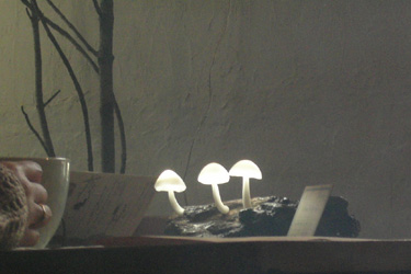 170226_mushrooms.jpg