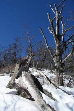 170302_snow_trees.jpg
