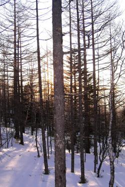 170308_snow_woods.jpg