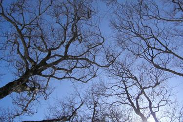 170310_dancing_trees.jpg