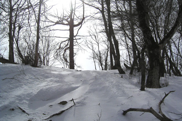 170314_snow_forest.jpg