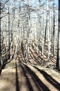 170318_winter_woods4.jpg