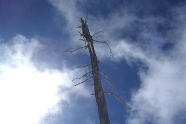 170322_tree.jpg