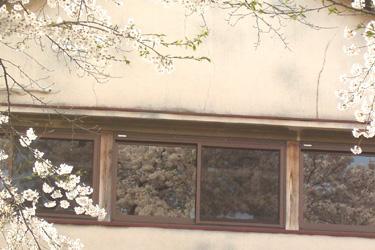 170404_sakura_windows.jpg