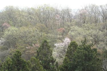 170514_spring_hill.jpg