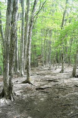 170515_forest.jpg