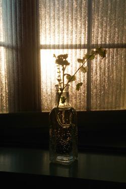170518_flower_gift.jpg