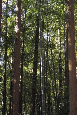 170530_bamboo.jpg