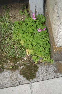 170601_natural_planter.jpg