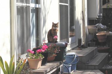 170606_cat.jpg