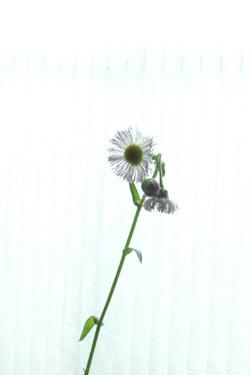 170621_flower_gift.jpg