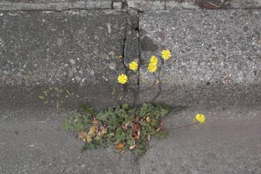 170624_natural_planter.jpg