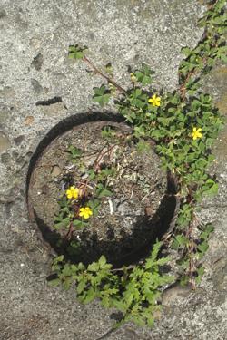 170707_natural_planter.jpg