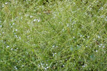 170801_small_flowers.jpg