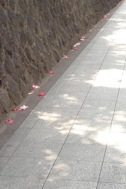 170803_fallen_flowers.jpg