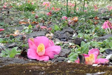 170807_fallen_red_flowers.jpg