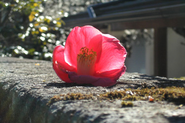 170810_fallen_red_flower.jpg