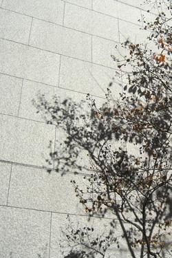 171021_tree.jpg