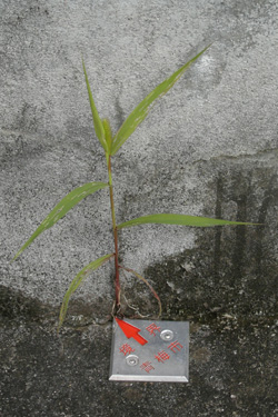 171023_naturai_planter.jpg