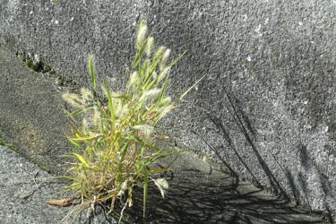 171103_natural_planter.jpg