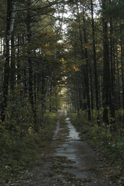 171104_forest_road.jpg