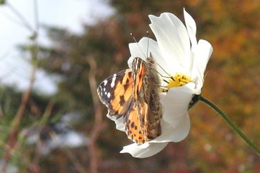 171115_butterfly.jpg