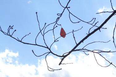 171116_single_leaf.jpg