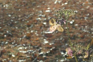 171125_dead_flower.jpg