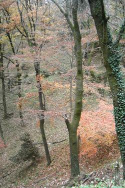 171128_autumn_ravine.jpg