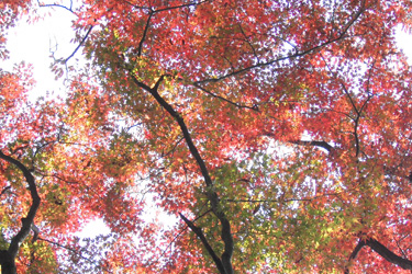 171203_fall_leaves.jpg