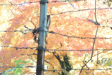 171205_autumn_tree.jpg