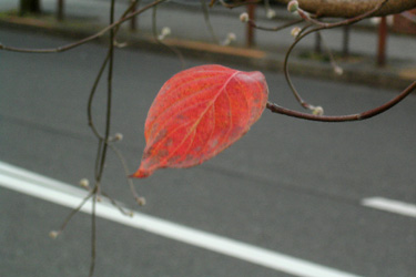 171206_autumn_leaf.jpg