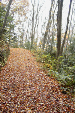 171209_autumn_path.jpg