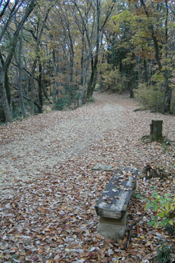 171210_autumn_path.jpg