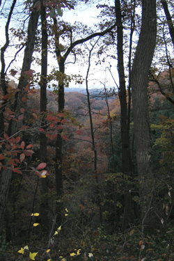 171212_autumn_forest.jpg