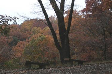 171213_autumn_benches.jpg