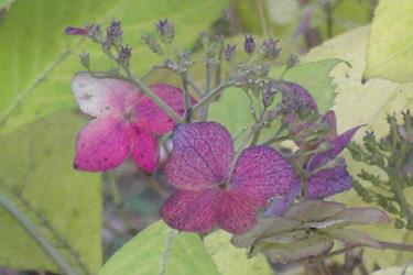 171215_butterfly.jpg