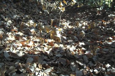171217_dead_leaves.jpg