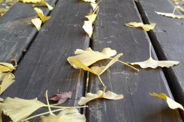 171219_fallen_leaves.jpg