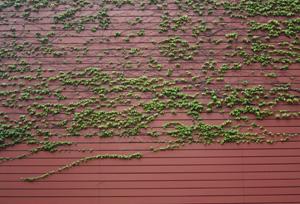 2006.05.10_leaves_art.JPG
