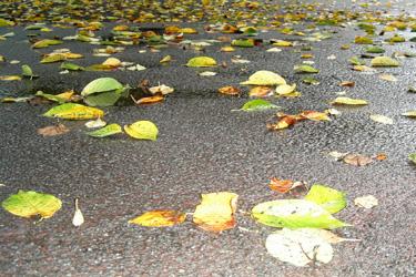 2013.07.29_fallen_leaves.jpg