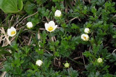 2013.08.04_flowers.jpg